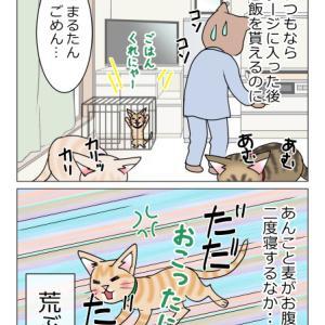 あんこ&麦1106 まるのXデー②当日の朝