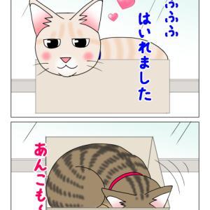 あんこ&麦1121 猫ホイホイ