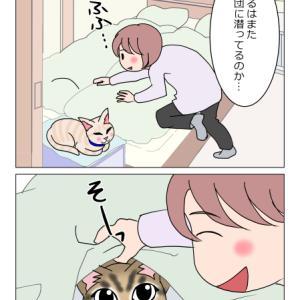 あんこ&麦1134 潜る猫