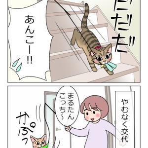 あんこ&麦1136 猫の習性