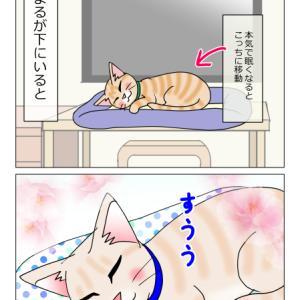 あんこ&麦1186 猫の平和