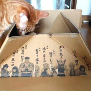 箱に集まる猫と箱に入りたかった麦
