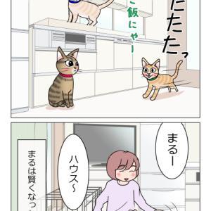 あんこ&麦1358 成長
