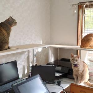 猫がいるだけで175話更新と進化する猫机