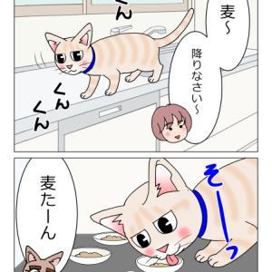 あんこ&麦1364 悪い猫