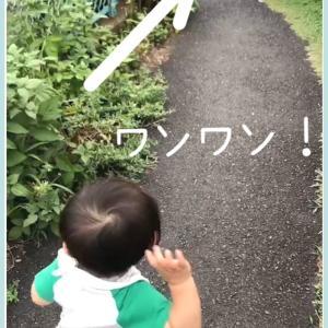 ☆サイン動画 お散歩コースで毎日子どもに欠かさず伝えた結果…ついに!☆