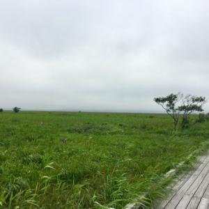 サロベツ湿原で念願のウォーキング!伸び伸びしたトナカイでマフマフ新食感!