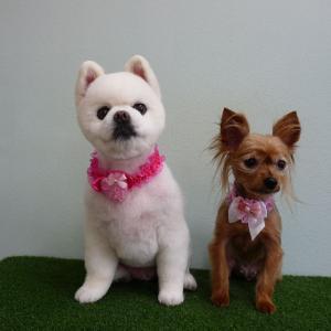 さくらちゃん&イヴちゃん