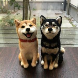 【画像】「柴犬」と「ハスキー」をミックスすると・・・