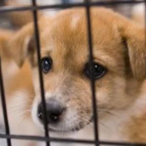 犬たちのためにご協力のお願い