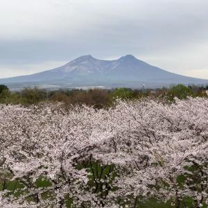 最終日〜実はGWくれちゃんと桜追いかけ旅行していました