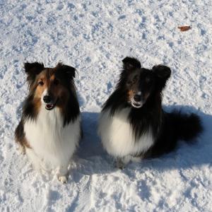 冬です・・・、ドッグラン「犬と森林浴」に行ってきました!