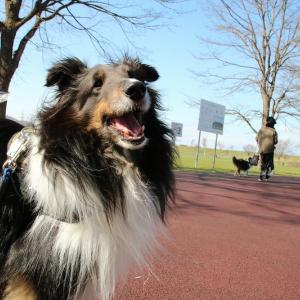 春の公園と笑う犬!