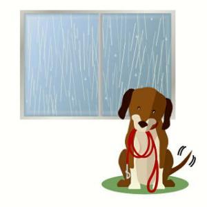 一日雨が降りそう!蒸し暑くて過ごしにくい