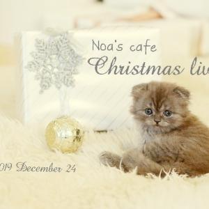 クリスマスもツイキャス配信