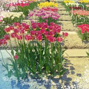 春の朝ー2020-(Noaオリジナルソング)