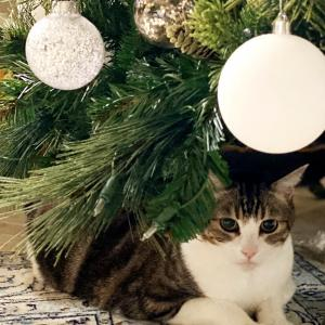 クリスマスツリーの下がお気に入り+クラブケーキディナー