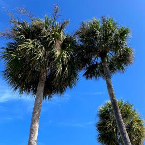 フロリダ南端、オトナのガールトークとお肌のデトックスハーブティー