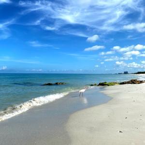 フロリダ南端、ビーチウォークとグリーンパパイヤの水曜日