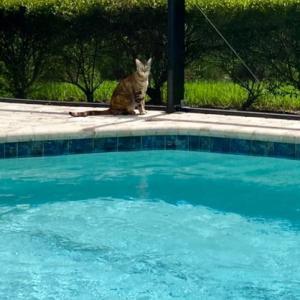 お隣のプールでアクアズンバ + グリルマスターのラム、な日曜日
