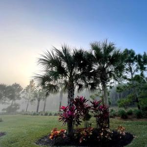 月曜断食 Day281 〜 霧の朝、ちょい戻し−8.1kg