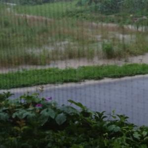 朝から大雨