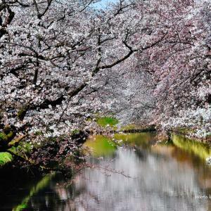 """""""#桜を見る会inアメブロ"""""""