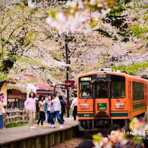 桜を見る会inアメブロ.2
