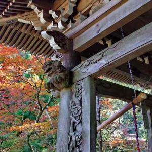 最乗寺(鐘楼と紅葉)