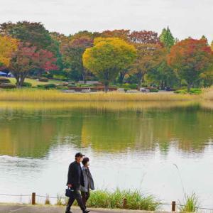 水鳥の池周辺の紅葉