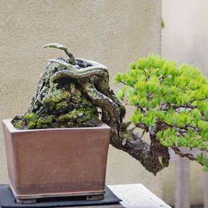 盆栽苑(日本初の国営盆栽展示施設)