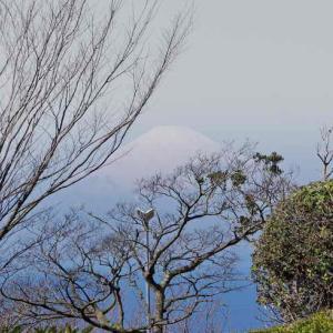 湘南国際村 センター(相模湾に富士山が浮かぶ)