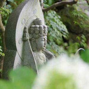 長谷寺(境内)季節の花々を楽しめる寺の魅力