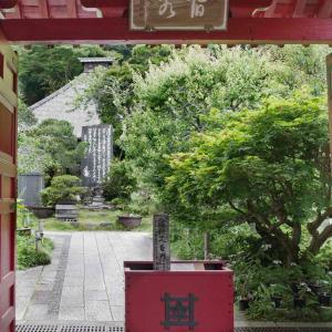 光則寺(こうそくじ)ヤマアジサイが美しい