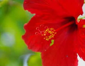大船フラワーセンター(グリーンハウスの花たち)