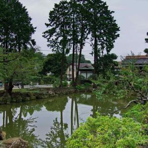 円覚寺 白鷺池(びゃくろち)桜の頃には水面に映り込んだその姿を楽しめます。