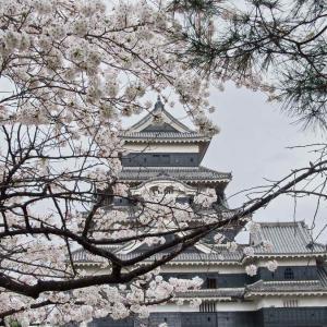 松本城(まつもとじょう)桜