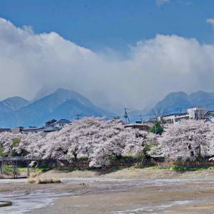 長坂牛池(ながさかうしいけ)の桜