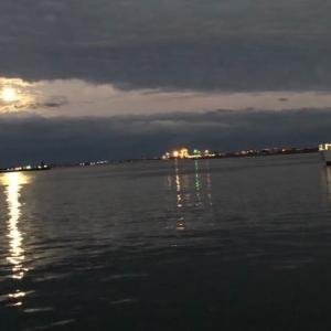 タチウオの捌き方と夜釣りの楽しみ方