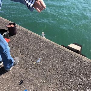 昨日の日中の釣り・・釣果は??