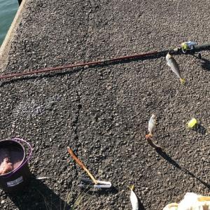 徳島県南でタチウオが爆釣中