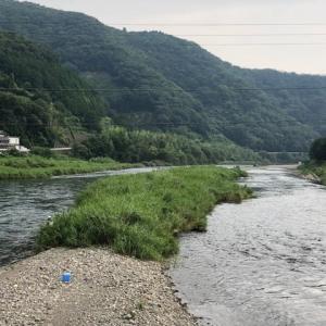 やっぱり鮎は沢山居ました by勝浦川下流域