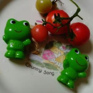 ミニトマトの実を収穫できました