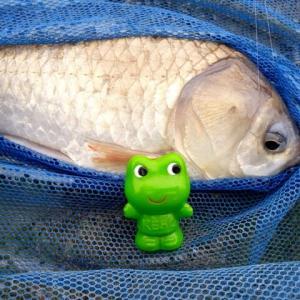 GWに続いて、「日本一汚い?」綾瀬川で釣りしました。