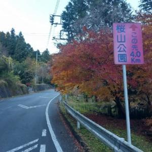 歩いて桜山