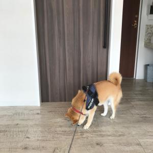 新しい獣医さん