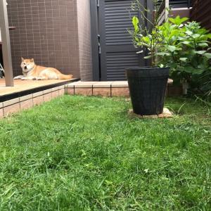 芝刈り 2回目〜