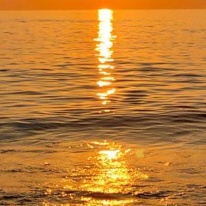 己の太陽に照らされし世界を  ただひたむきに歩み進む道は