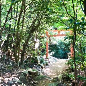 封印解除と火水の継承、天と地をつなぐ原生林と三角形を登る暗号。ギザの大ピラミッドから日本へ 7