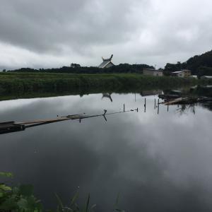 四ツ谷池釣行 Gulpでバス釣り